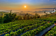 Beautiful Landscape Of Mountain Misty Morning Sunrise Is The Travel Destination And Famous Place At Khao Kho District, Phetchabun Province, Thailand. Relaxation With The Natural