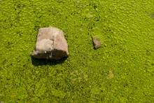Developpement D'algues Dans Une Eau Stagnante