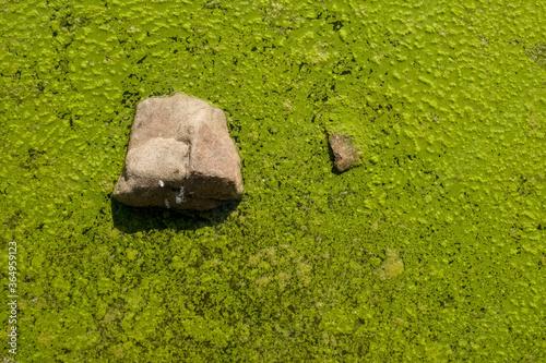 Fényképezés developpement d'algues dans une eau stagnante