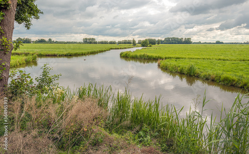 Fototapeta Typical Dutch polder landscape on a cloudy day in the summer season. It is windless and the smooth water surface reflects the cloudy sky. obraz