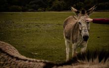 Donkeys Couple