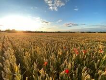 Large Sun Setting Across Poppy...