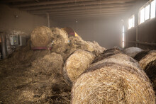 Processing Of Hay For Biomass ...