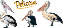 Three Pelicans In Different Po...