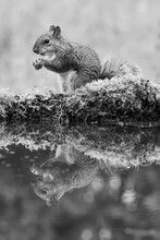 Black And White Image Of A Gre...