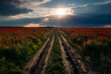 Rural Dirt Muddy Road Passing Through A Field Of Poppies