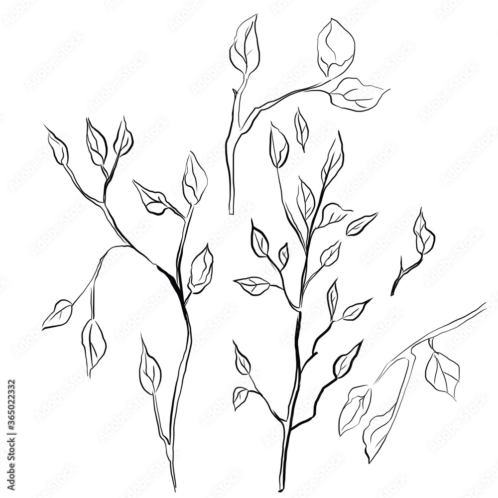 Illustration of flowering twigs.