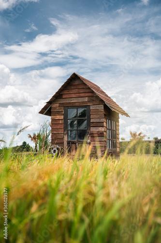 Fotografia Wooden hut and blue sky on paddy rice field
