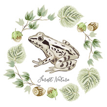 Frog, Green Leaves, Nuts, Whit...
