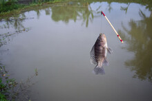 A Fish Hang-on Hook With Float...