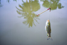A Fish Hang-on Hook With Floater .Catching Fish With Fishing Rod And Fishhook .