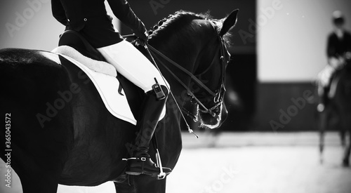 Fototapeta Black and white image of riders on horseback on the day of equestrian sports competitions. Сompetitor. Skill. obraz