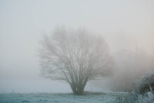 Frosty Trees In Fog At Sunrise