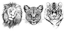 Lion, Leopard, Tiger, Graphic ...