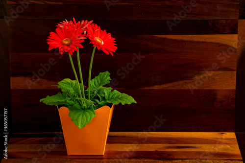 Fotografia flower in a vase