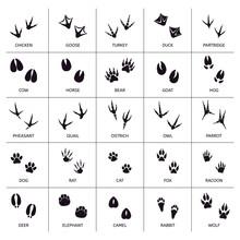Animals Foot Marks. Animal Foo...