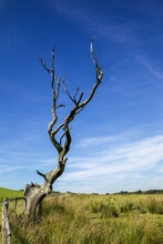 Lone Dead Tree Against A Blue ...