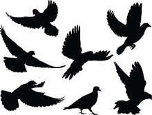 Silhouettes Of Doves In Many D...