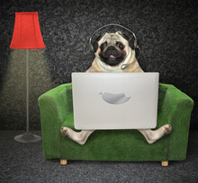 The Pug Dog In Headphones Is Using A Silver Laptop On A Green Armchair Near A Red Floor Lamp At Home.