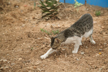 A Street Cat Buries Something