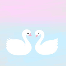 Cute Pair Of White Swans In Lo...