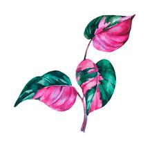 Watercolor Tropical Leaves. Ph...