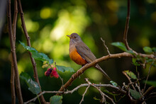 Cute Bird At Magical Forest. T...