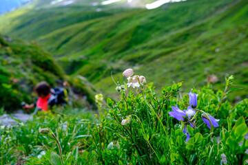 Salendo tra i prati verso il Passo Gries, Alpi Lepontine