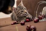 Fototapeta Zwierzęta - Kot i czereśnie