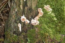 Tree Fungi Growing On Trees Photographed With The Macro Objective
