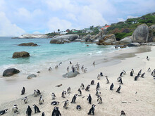 Penguins On Boulders Beach In Cape Town, With White Sand, Rocks, Blue Sky, Clouds And Green Hills (Simon's Town, South Africa)