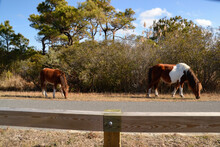 Wild Brown And White  Mare And...