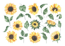 Watercolor Sunflowers With Gre...