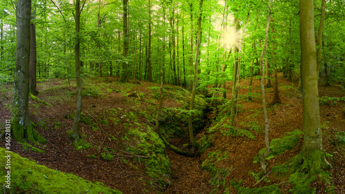 Fototapeta Bukowy las na terenie miasta Kartuzy na Kaszubach obraz