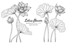 Lotus Flower And Leaf Hand Dra...