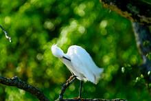 Snowy Egret At Wildlife Refuge