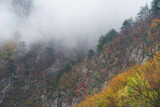 Autumn forest colours in the Carpathians, Romania, Europe - 365298739