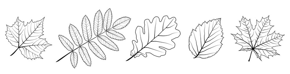 Set of vector leaves. Silhouette of plants. Natural elements for season backgrounds, templates, wallpaper, cards