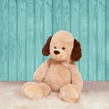 Puppy Teddy Sitting On A Carpe...