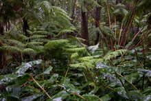 Wet And Lush Foliage In A Trop...