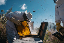 Beekeepers Working To Collect ...