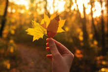 Yellow Leaf In Woman Hand In S...