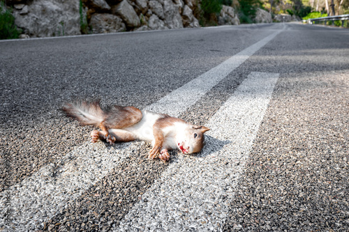 Animals are killed by crossing the roads hit by cars.