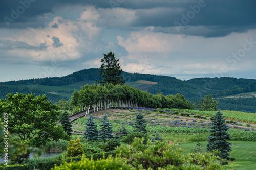 Photo 7月ぜるぶの丘より望む風景