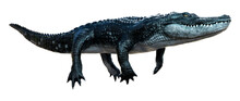 3D Rendering Black Alligator On White