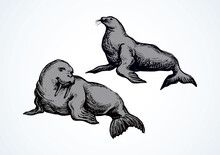 Walrus. Vector Drawing
