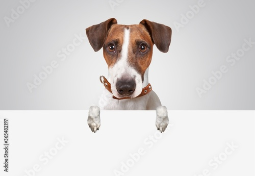Fotografia Dog.