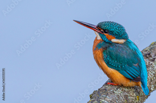 Photo Kingfisher on a branch
