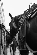 Barrel Horse Western
