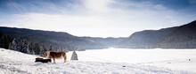 Inverno In Cansiglio